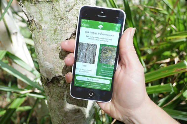 Identify trees with the new Woodland Trust Tree ID app